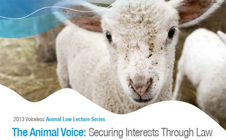 Voiceless Animal Law Lecture Serieis