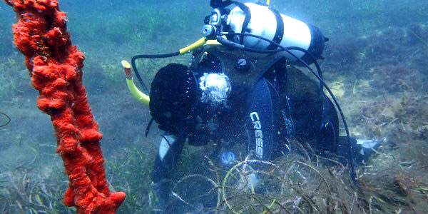 Diver taking field samples