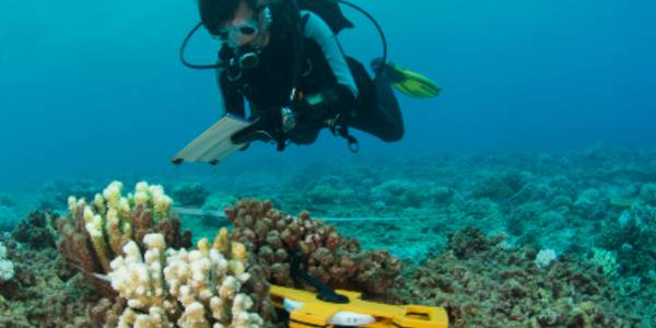 scientist underwater testing a device on coral
