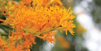 close up image of an orange flower
