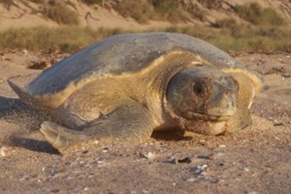 turtle600x400